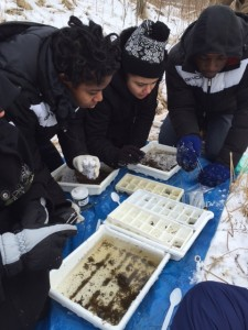 Scholars collecting samples